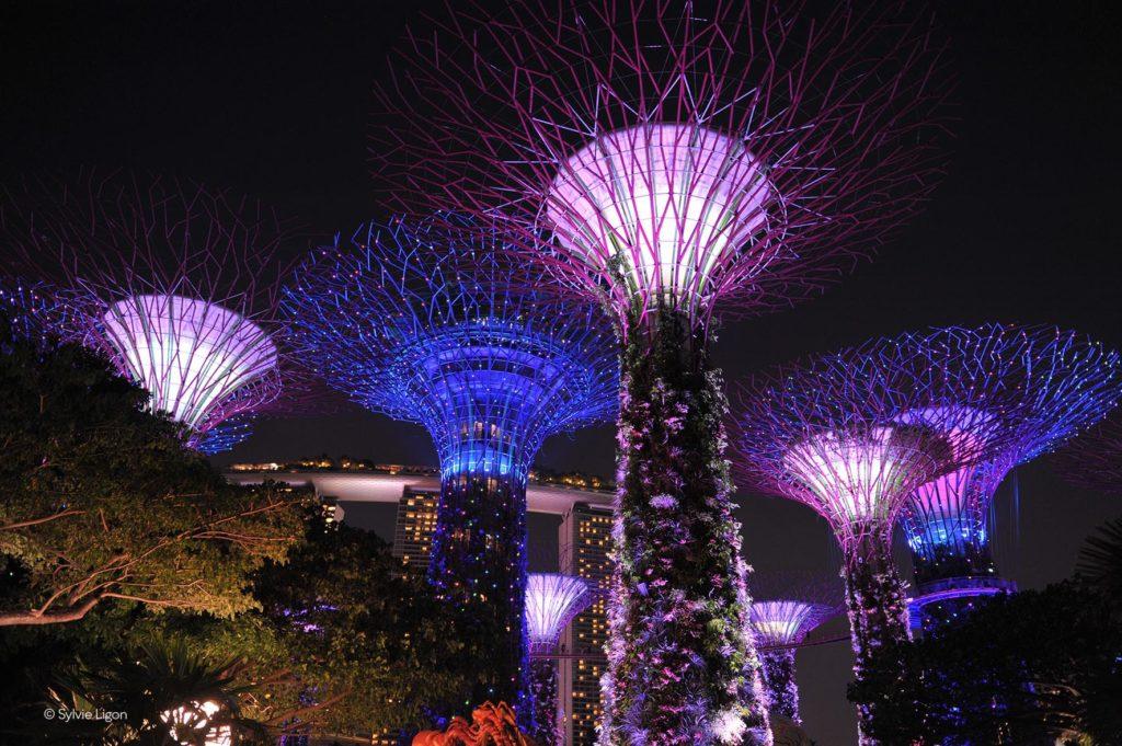 Singapour - Arbres de nuit