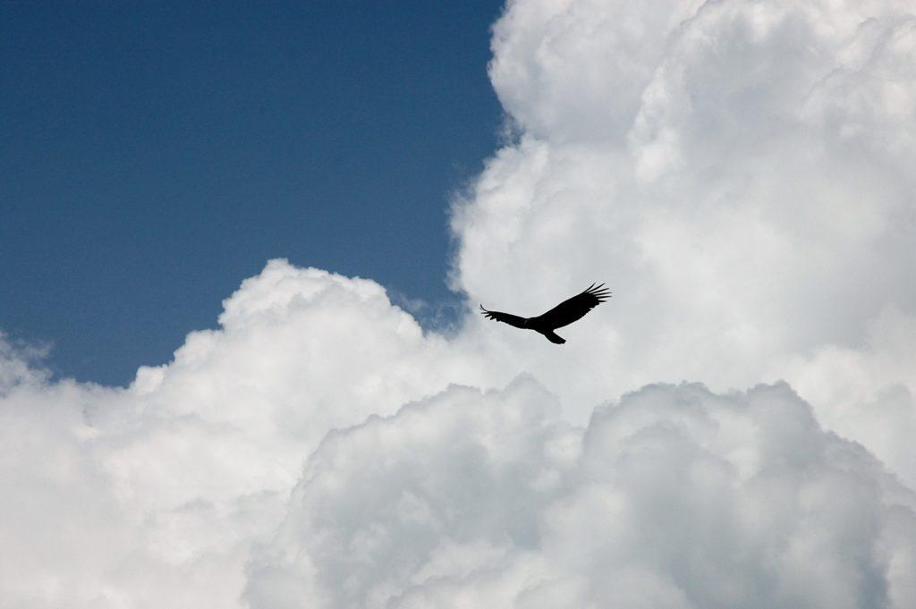 Envol de l'aigle