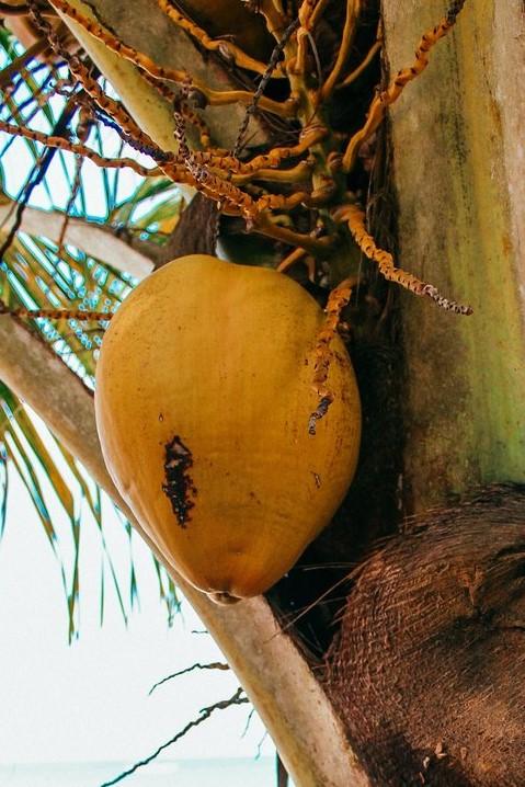 Noix de coco et huile
