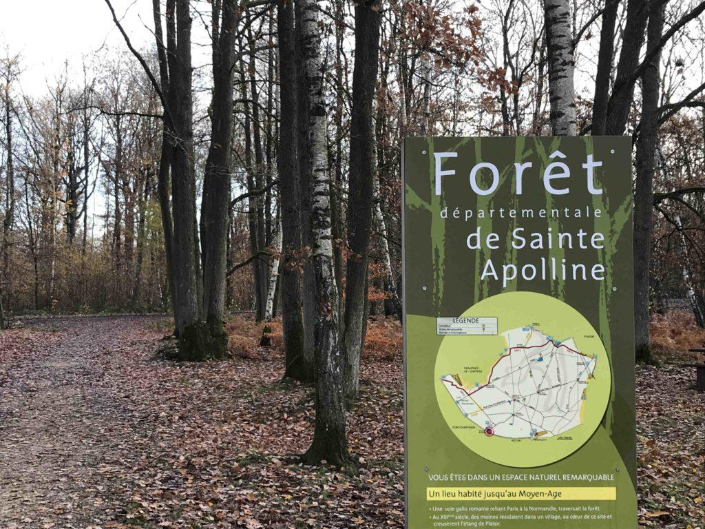 Forêt de Sainte-Apolline
