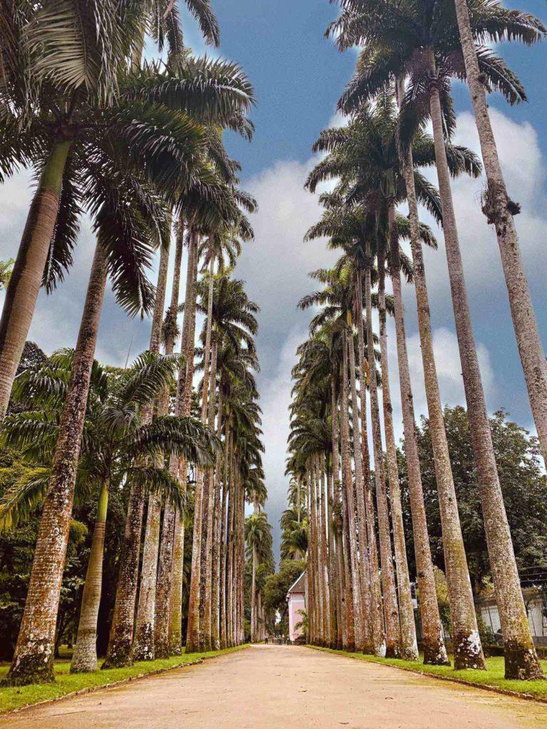 Jardin botanique - Rio