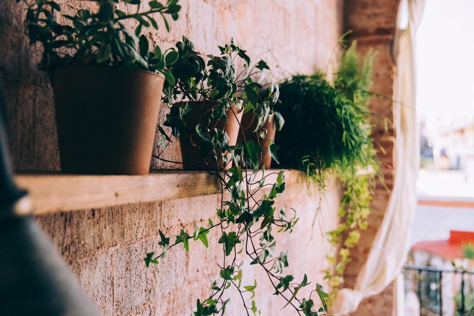 Plantations sur un balcon